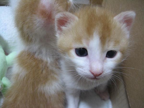 Kitty008